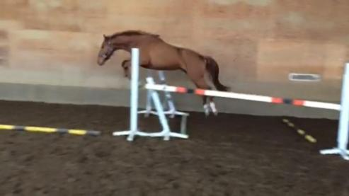 Free Jump Age 3